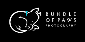 Bundle of Paws Photography