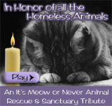 Homeless Animals